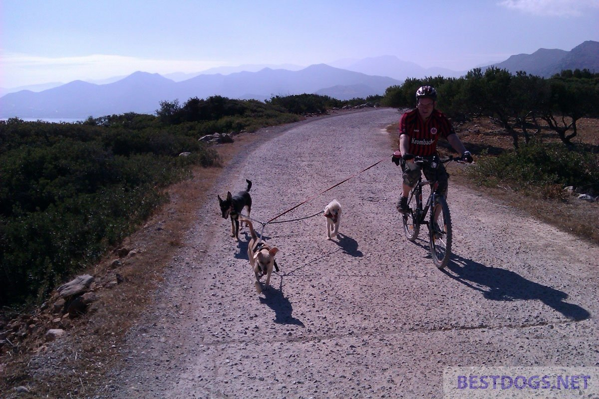 Cycling with the dog
