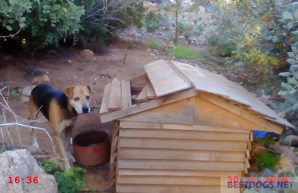 Animal abuse Istro