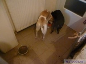 two dogs eating out of a bowl together