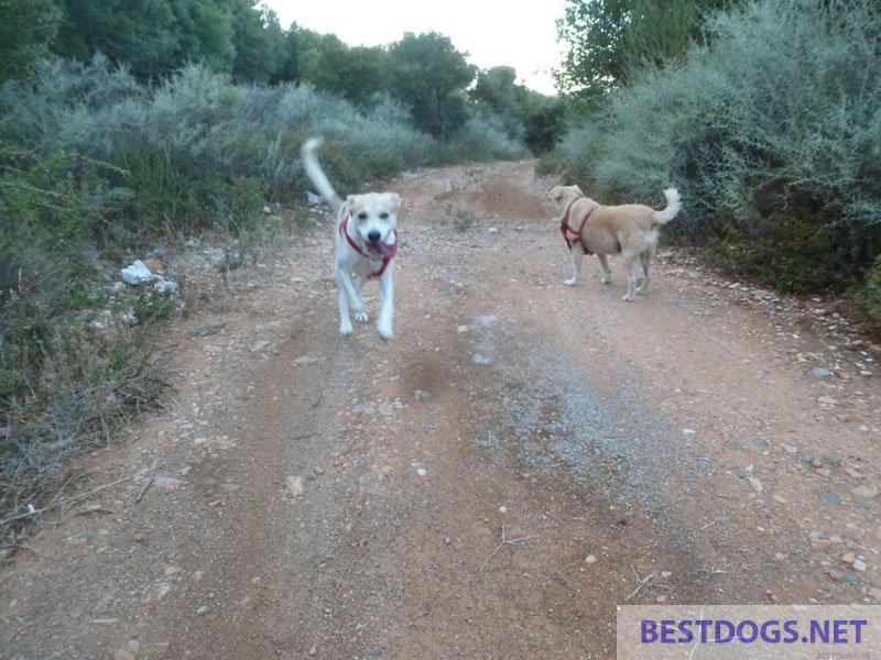 dog running freely