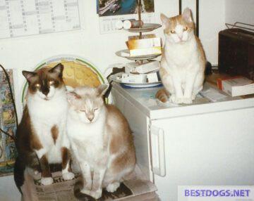 Three house cats