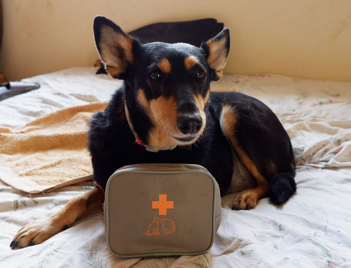 dog with its first aid kit