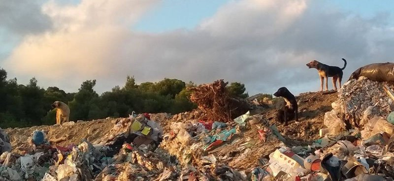 Garbage Dogs