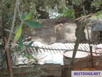 'chicken dog' on March 19