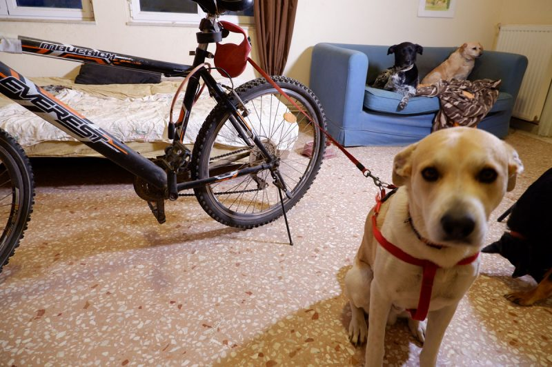 Extendable dog leash attached to the bike
