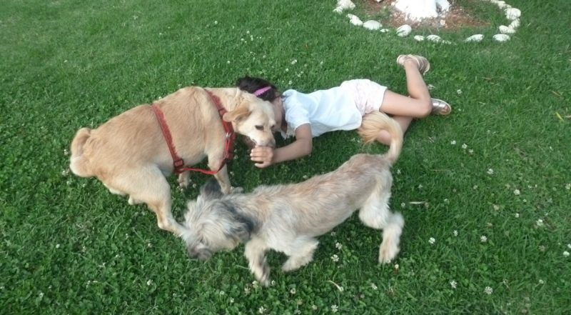 child playing with dogs
