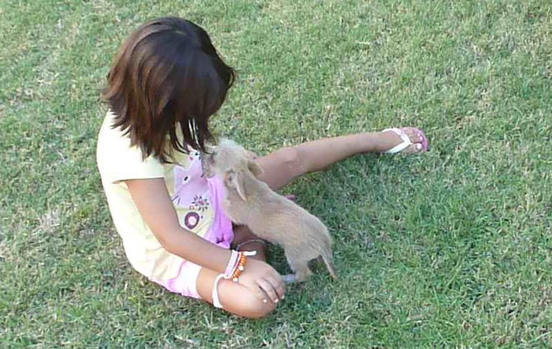 positive relationship between dog and child