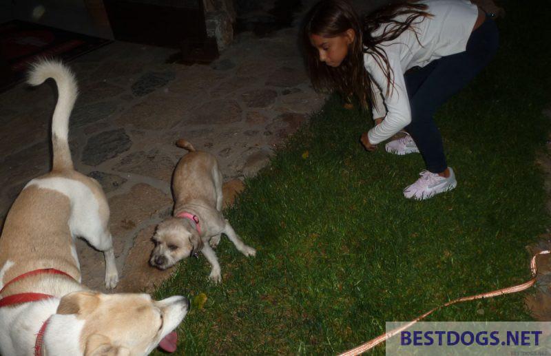 Understanding the behavior of dogs