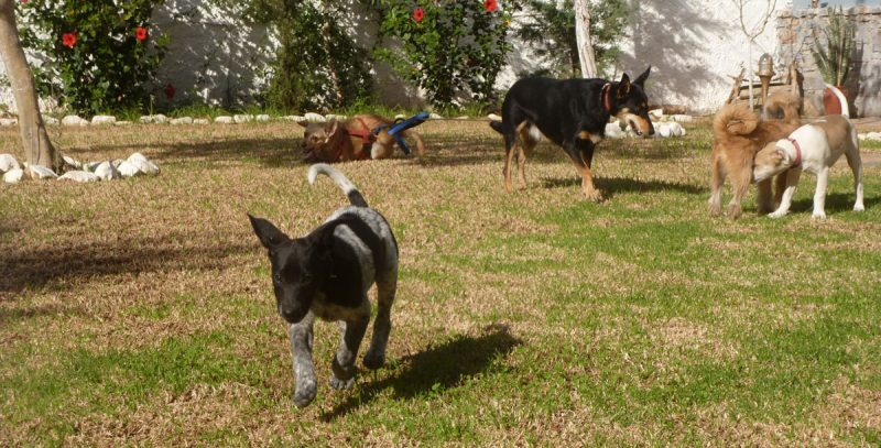 Socialization of puppies