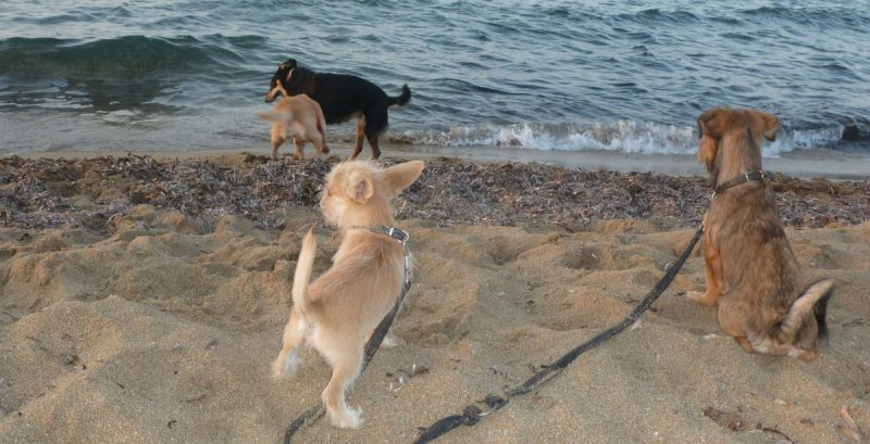 Two puppies for the first time at the sea.