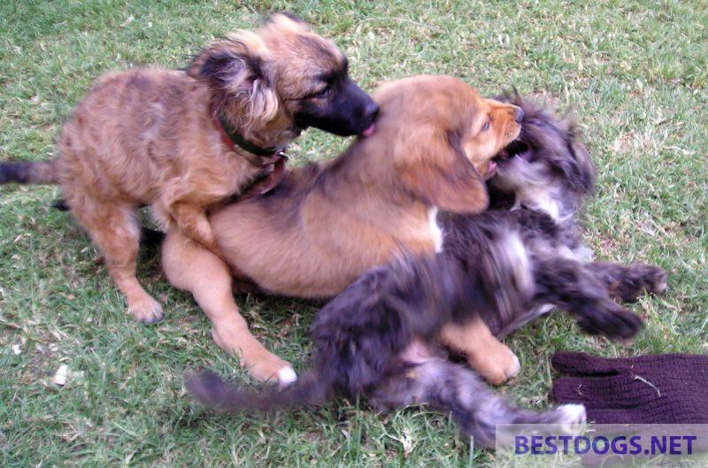 Puppy games.